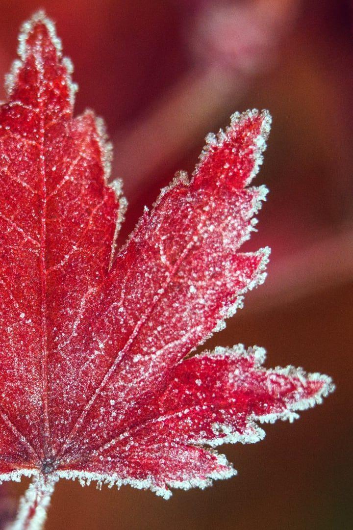 frozenfeature